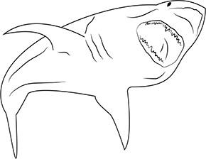 Ausmalbild Aggressiver Hai In 2020 Ausmalen Ausmalbilder Tiere Ausmalbild