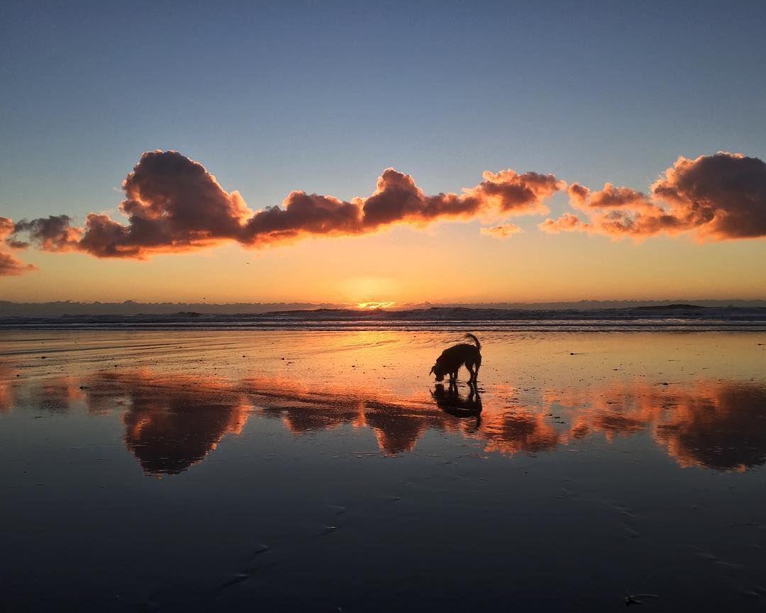 Gaia Blends, Ocean Shores, WA (2021)
