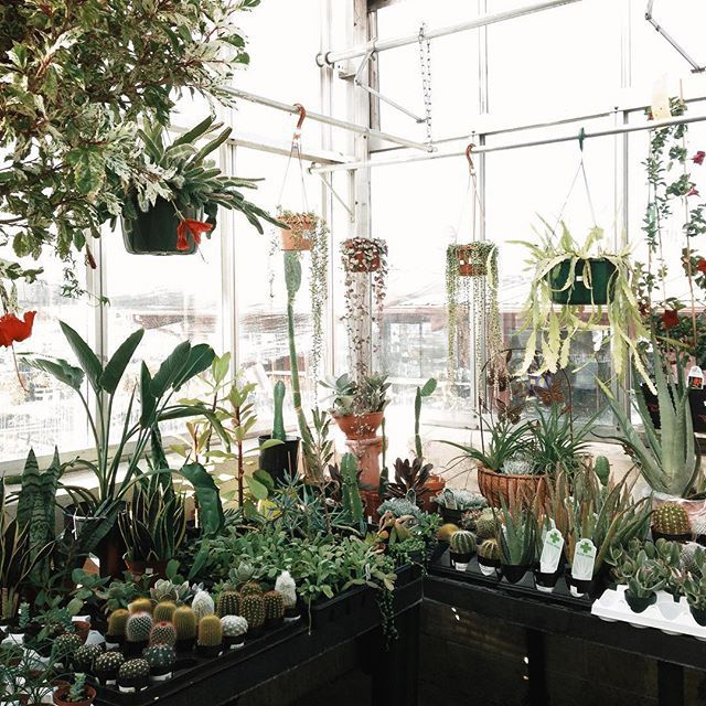 Can I Just Live In A Greenhouse Already Throwback To Nursery Spokane