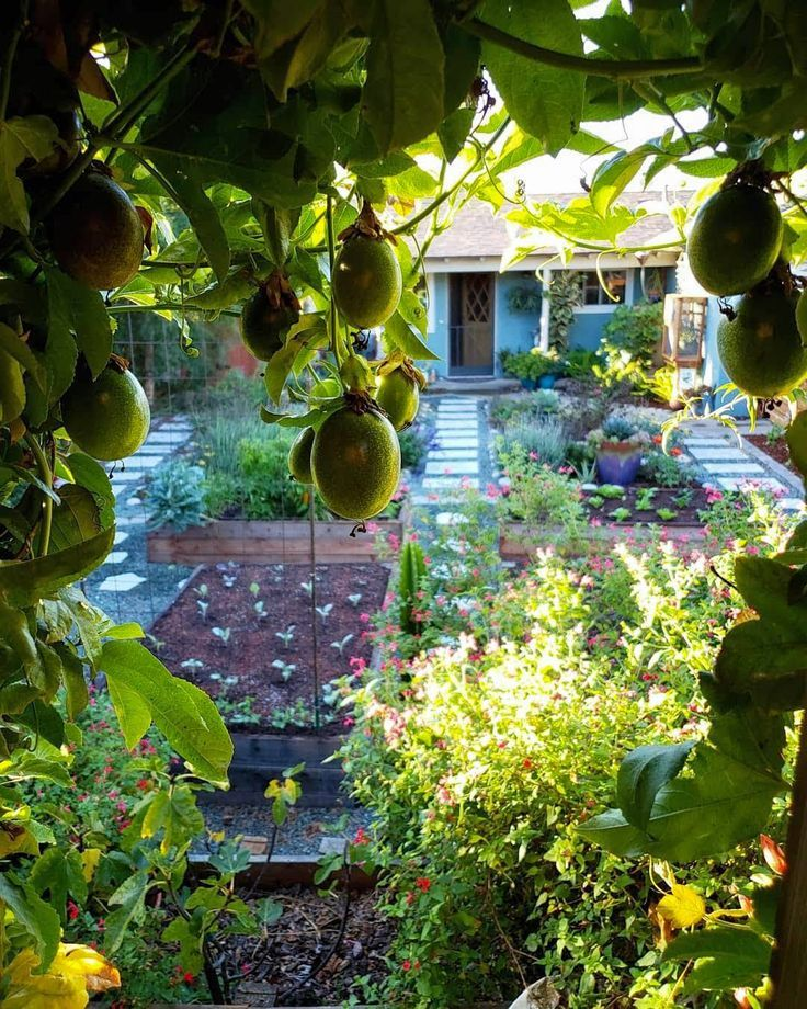 How to Grow Purple Passion Fruit vs. Maypops: The Ultimate Guide