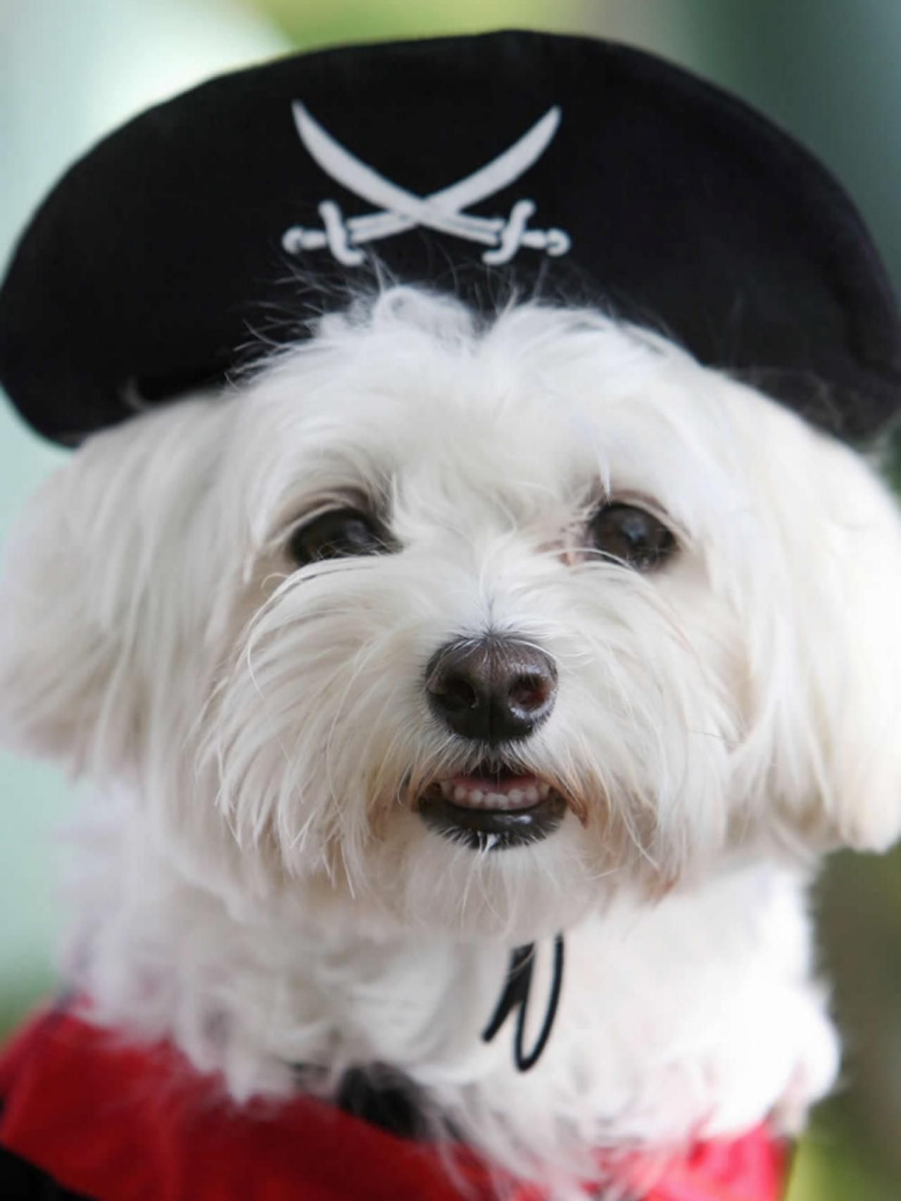 Halloween Costume Ideas for Dogs and Cats   Diy party ideas, Home ...