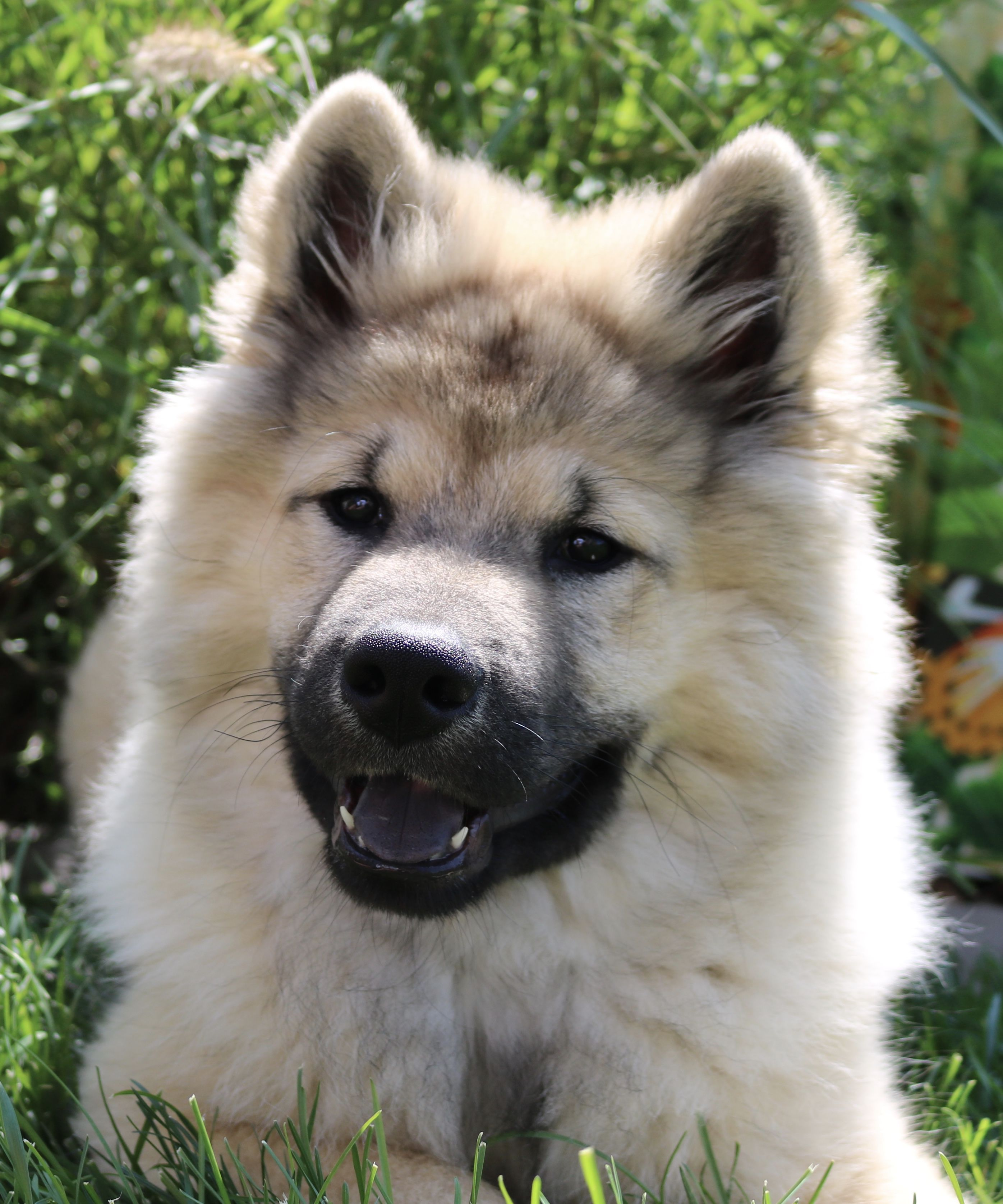 Pin By Kimm Lisk On Dogs I Want Cute Dogs And Puppies Cute Fluffy Puppies Cuddly Animals