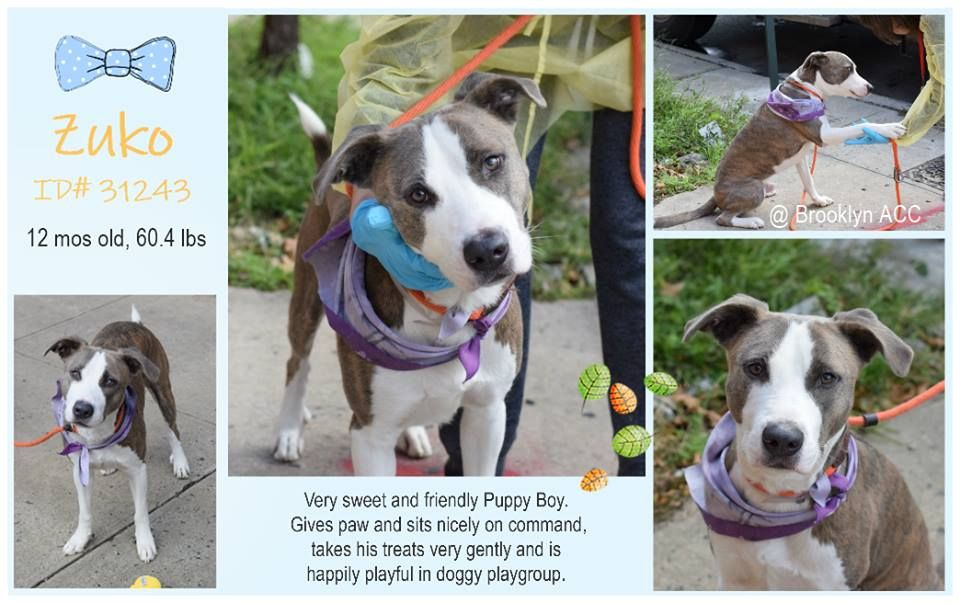 Image may contain dog and text (With images) Nyc dogs
