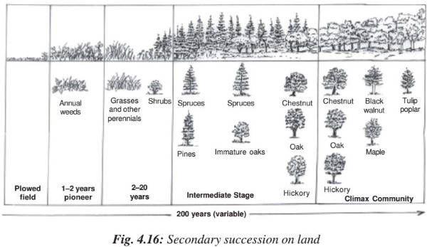 bf58a75d173ae8b8595f26acde14a0e8 ecological succession primary & secondary succession homeostasis