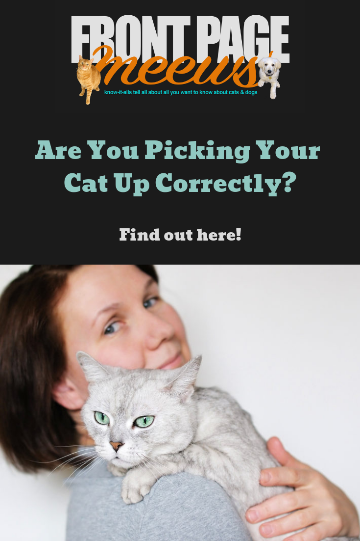 Are You Picking Your Cat Up Correctly Cat Health Cats Know It All