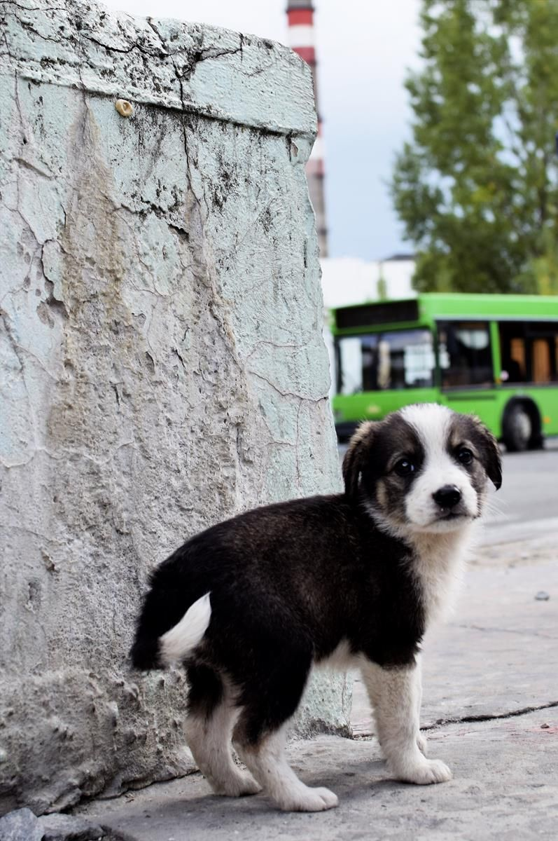 We need your help to save the Dogs of Chernobyl! This