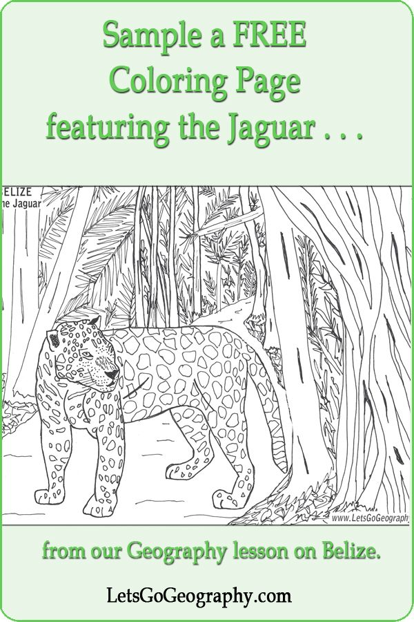 free homeschool geography coloring page with a jaguar from lesson on belize at letsgogeography - Geography Coloring Book