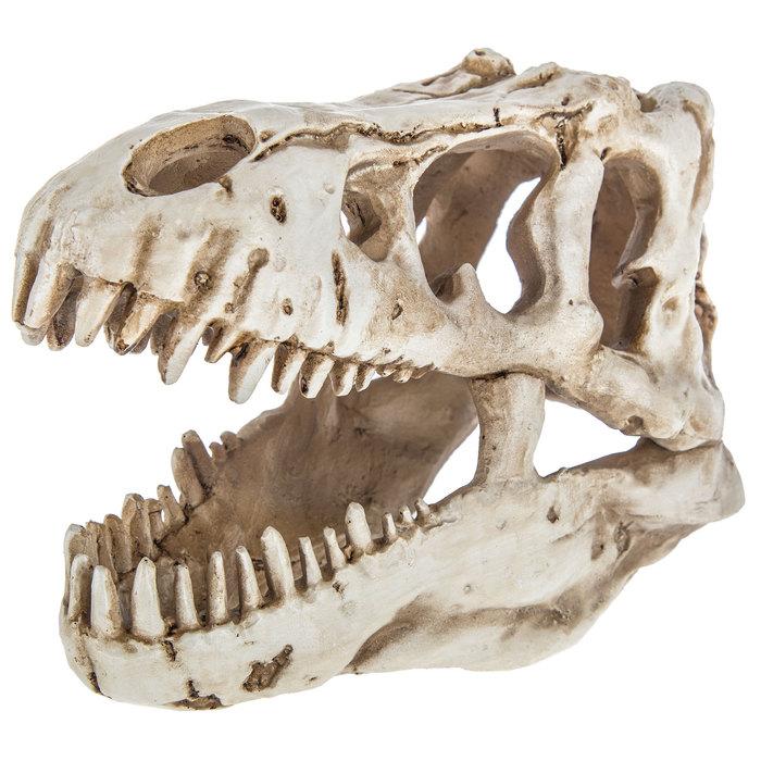 Dinosaur Skull Decor Hobby Lobby 1469212 Dinosaur Room Decor Dinosaur Room Skull Decor