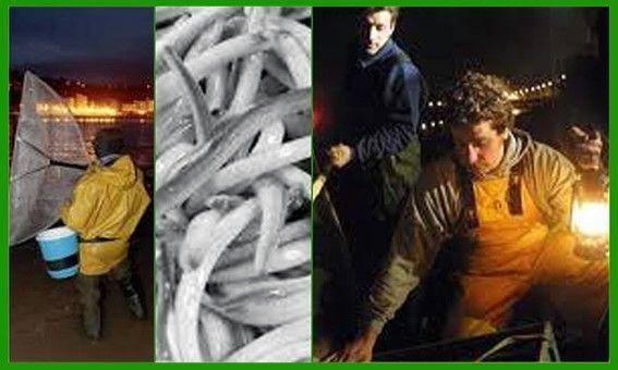 Asturias. Pesca de la angula