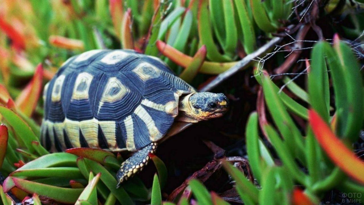 Фото черепах в 2020 г | Черепашонок, Животные, Черепаха