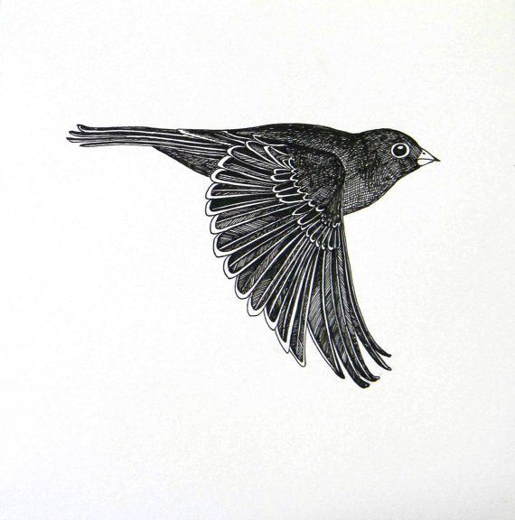 The Gallery For --u0026gt; Flying Crow Drawing