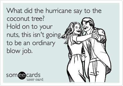 Image result for hurricane say to the coconut tree meme