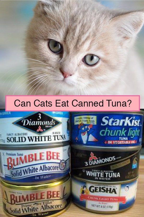 Can Cats Eat Canned Tuna? Why It Might Be Harmful (With