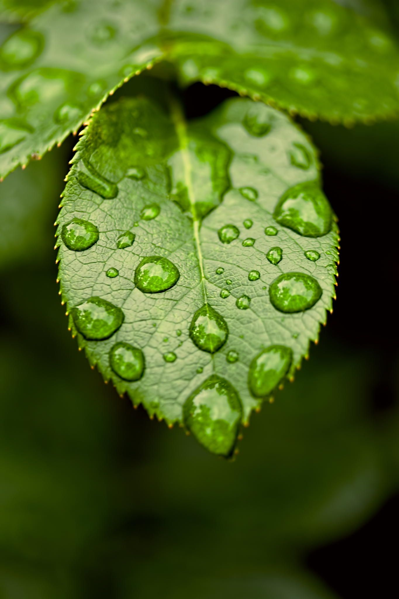 Your Standard Droplets By Kevin Davila On 500px Leaf Photography