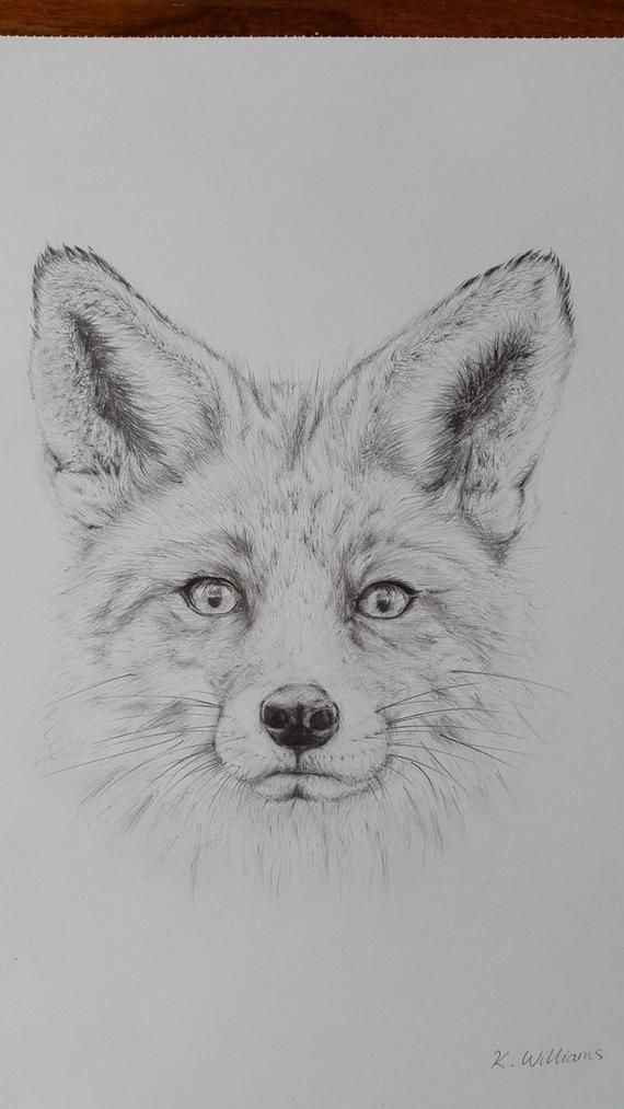Fox pencil drawing, Original / Giclee Print A4, Fox Print, Elegant Pencil
