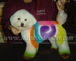 Repinned Creative Dog Grooming School In Thailand Very