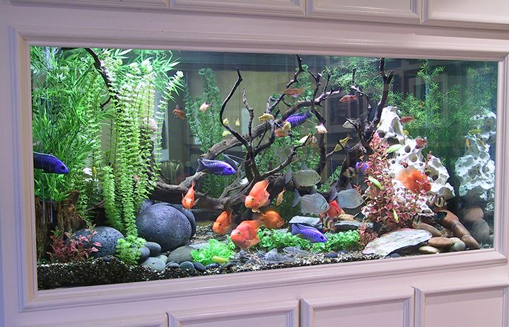200 Gallon Fish Tank Google Search Fresh Water Fish Tank Fish Tank Design Fish Tank Decorations