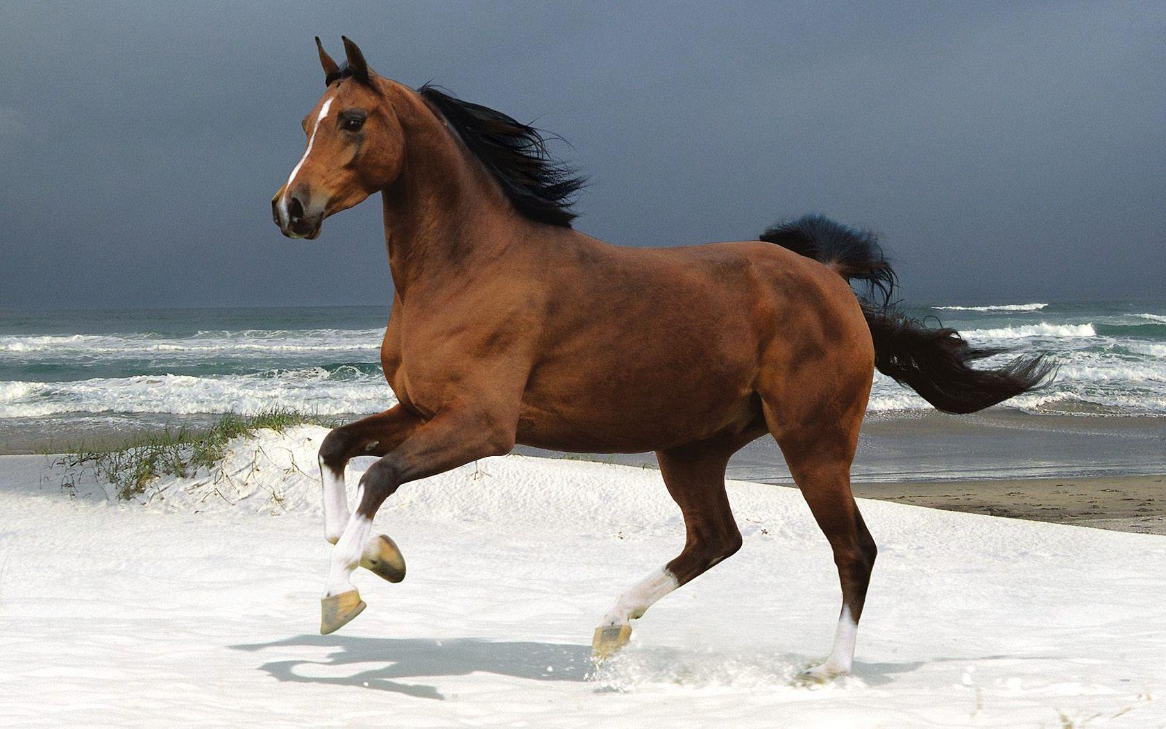 Must see Wallpaper Horse Pinterest - bf5d7b16586b2c34bb6bd28073f6d2c1  2018_883946.jpg