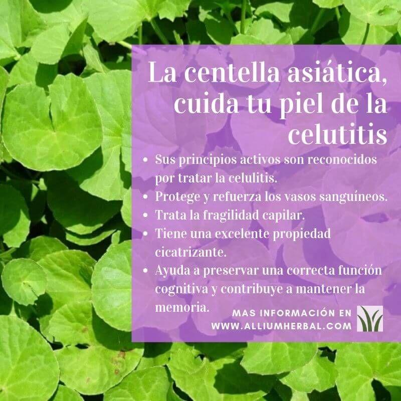 La Centella Asiática Cuida Tu Piel De La Celutitis Hierbas Curativas Plantas Medicinales Hierbas Jardineria Y Plantas