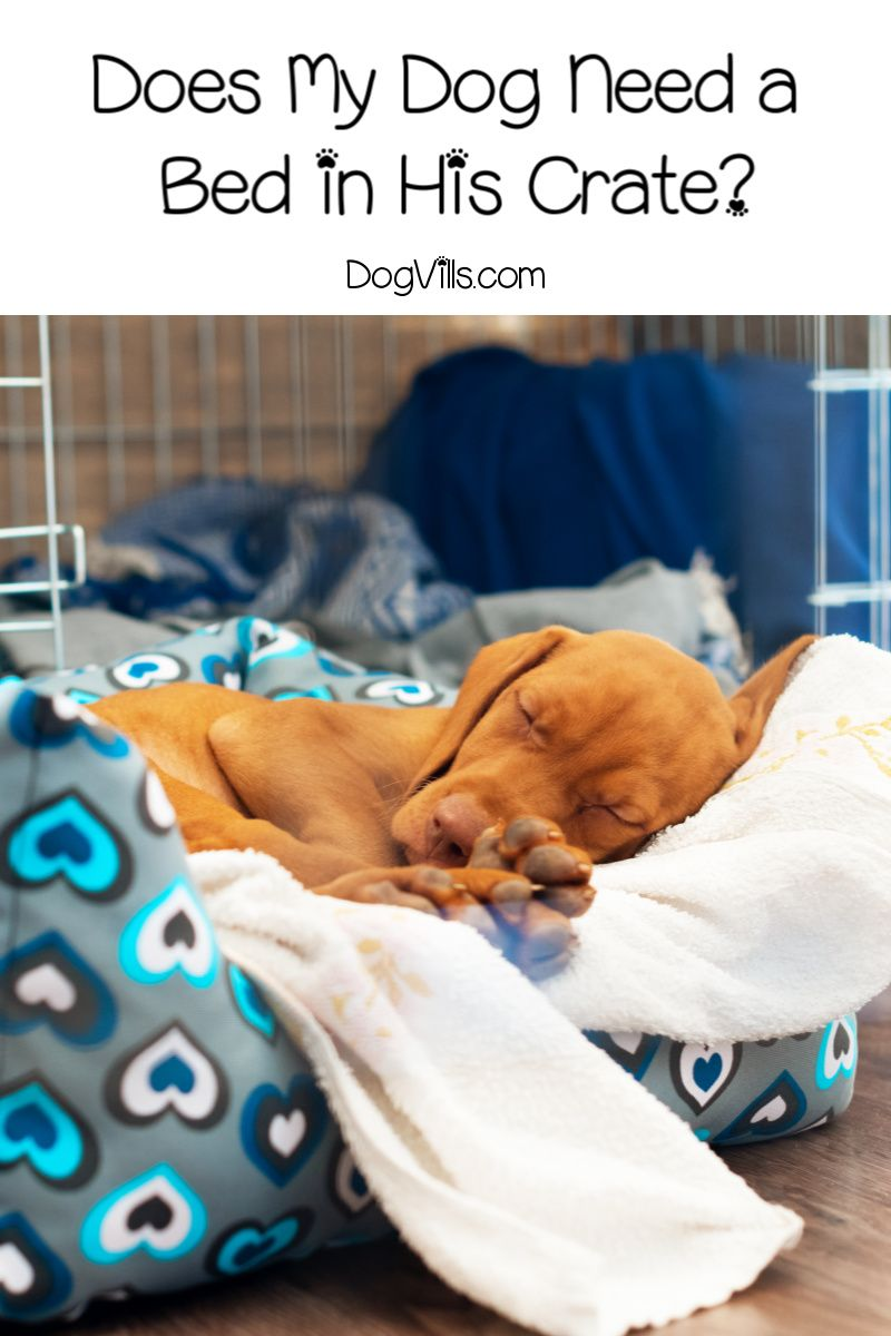 bf5faa946c310a49dd428969c3410c65 - How Do I Get My Puppy To Sleep In His Bed