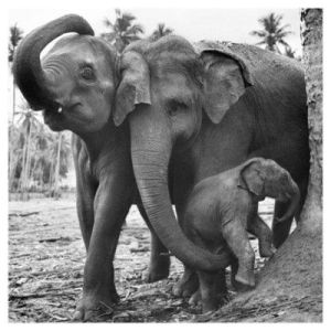 """Elephant Family ~ """"Come on, little one, we're not going that way."""" by MoJoJoJo479"""