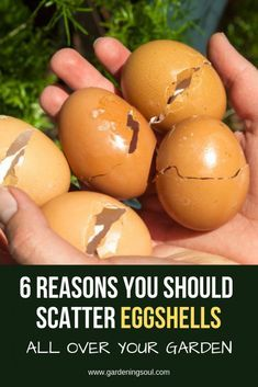 6 Reasons You Should Scatter Eggshells All Over Yo