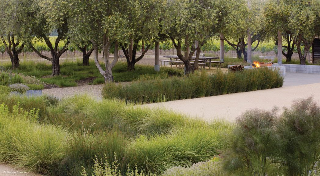 Medlock ames winery nelson byrd woltz landscape for Nelson byrd woltz landscape architects