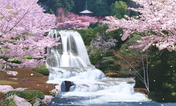 peach blossom clip art sagura japan cherry blossom moving waterfall image vector clip art