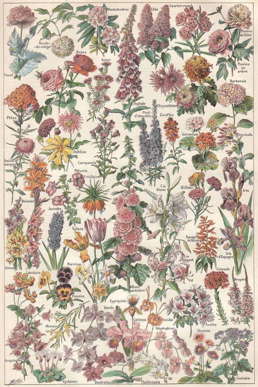 Fleurs In 2020 Vintage Botanical Prints Botanical Illustration Prints