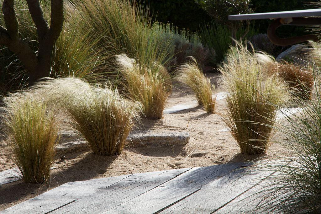 jardin graphique de bord de mer : associations de graminées, yuccas ...