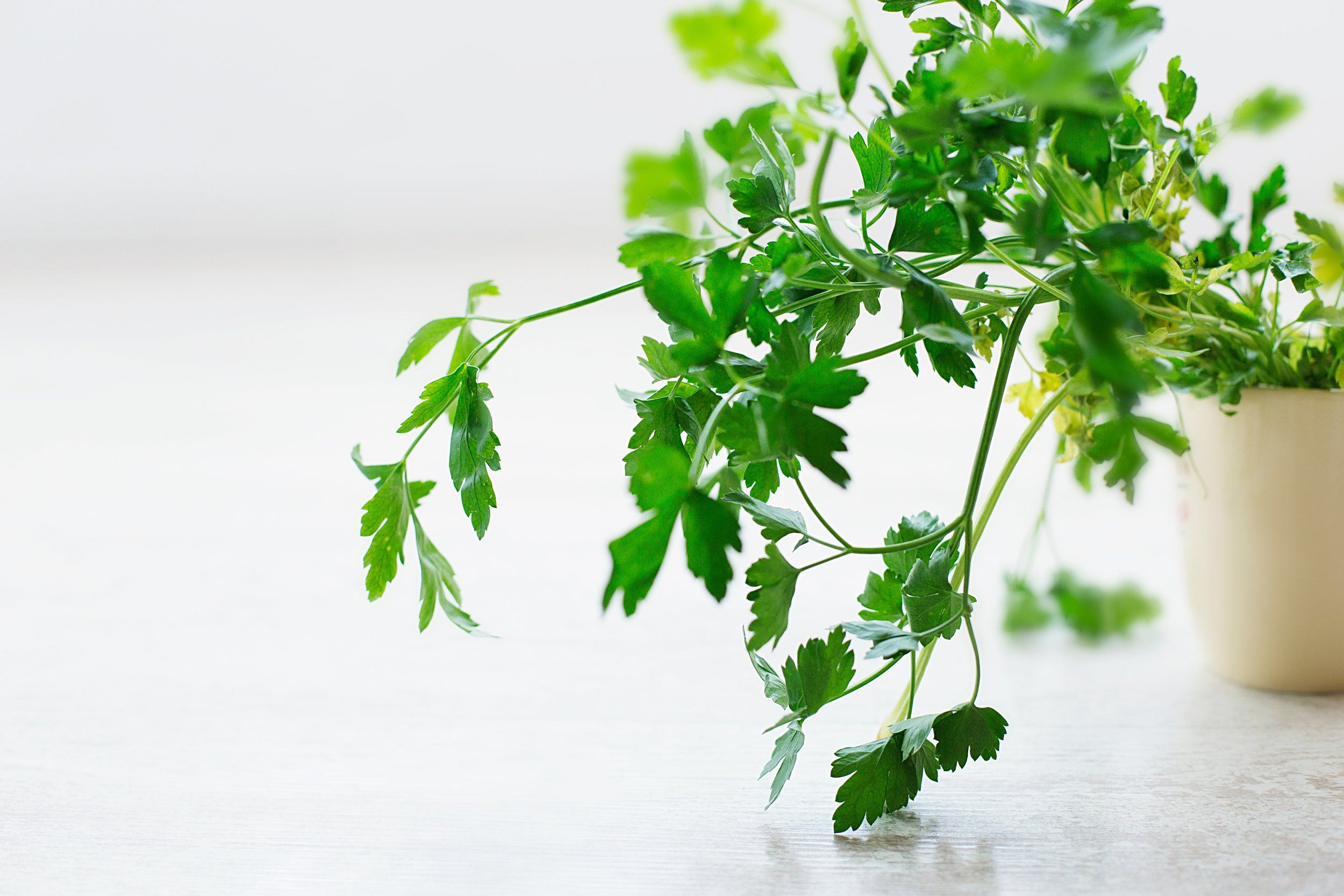 Health Benefits Of Herb & Spices My Top Picks That I Use