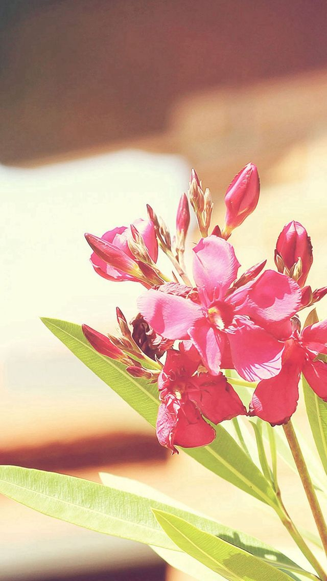 Nature Sunny Bright Flower Plant IPhone 5s Wallpaper