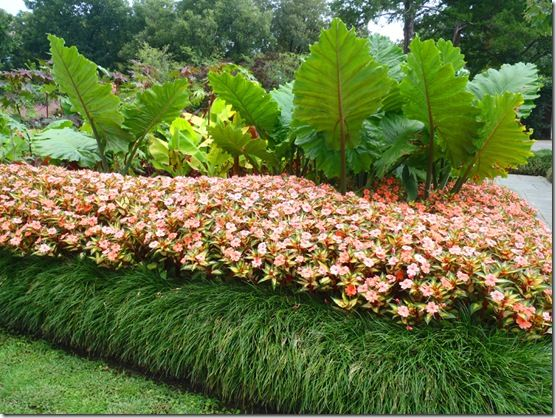 using grass like edging with the tall tropical plants in the middlein this design they have simply planted three rows of plants first row is short grass - Garden Design Using Grasses