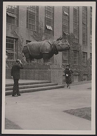 [Katherine Weems being introduced at the unveiling ceremony for her rhino sculptures at Harvard]