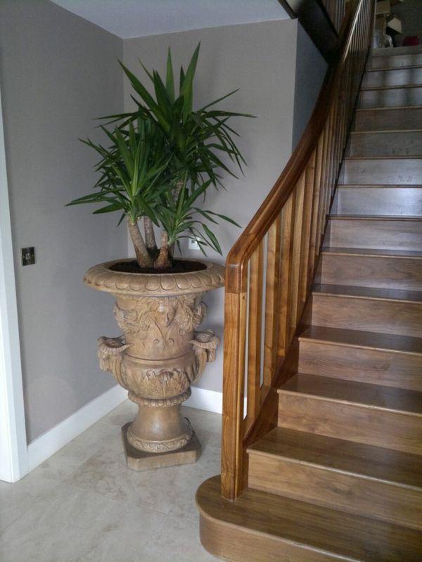 palmlilie eine bezaubernde zier und nutzpflanze pflanzen und blumen pinterest pflanzen. Black Bedroom Furniture Sets. Home Design Ideas