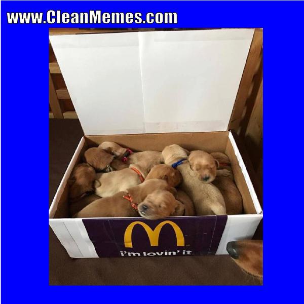 Dank Dog Memes Clean