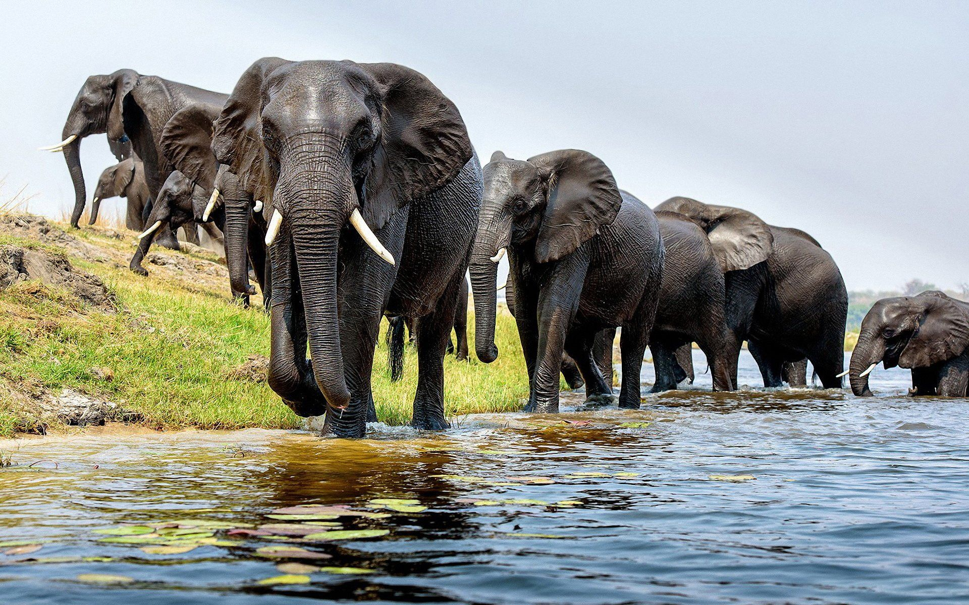 Elephant HD Wallpapers Backgrounds Wallpaper | Wallpaper | Pinterest | Hd wallpaper, Elephant ...