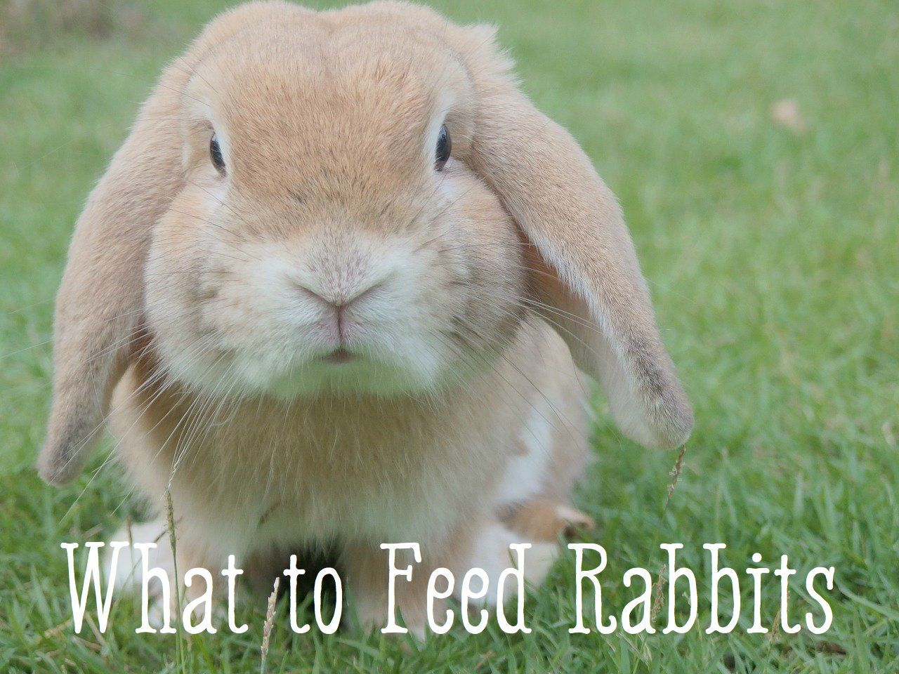 Bunny Care Guide What Foods Do Rabbits Eat? Cute bunny