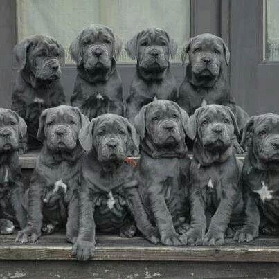 Mooi Zitten Allemaal Dogs Animals