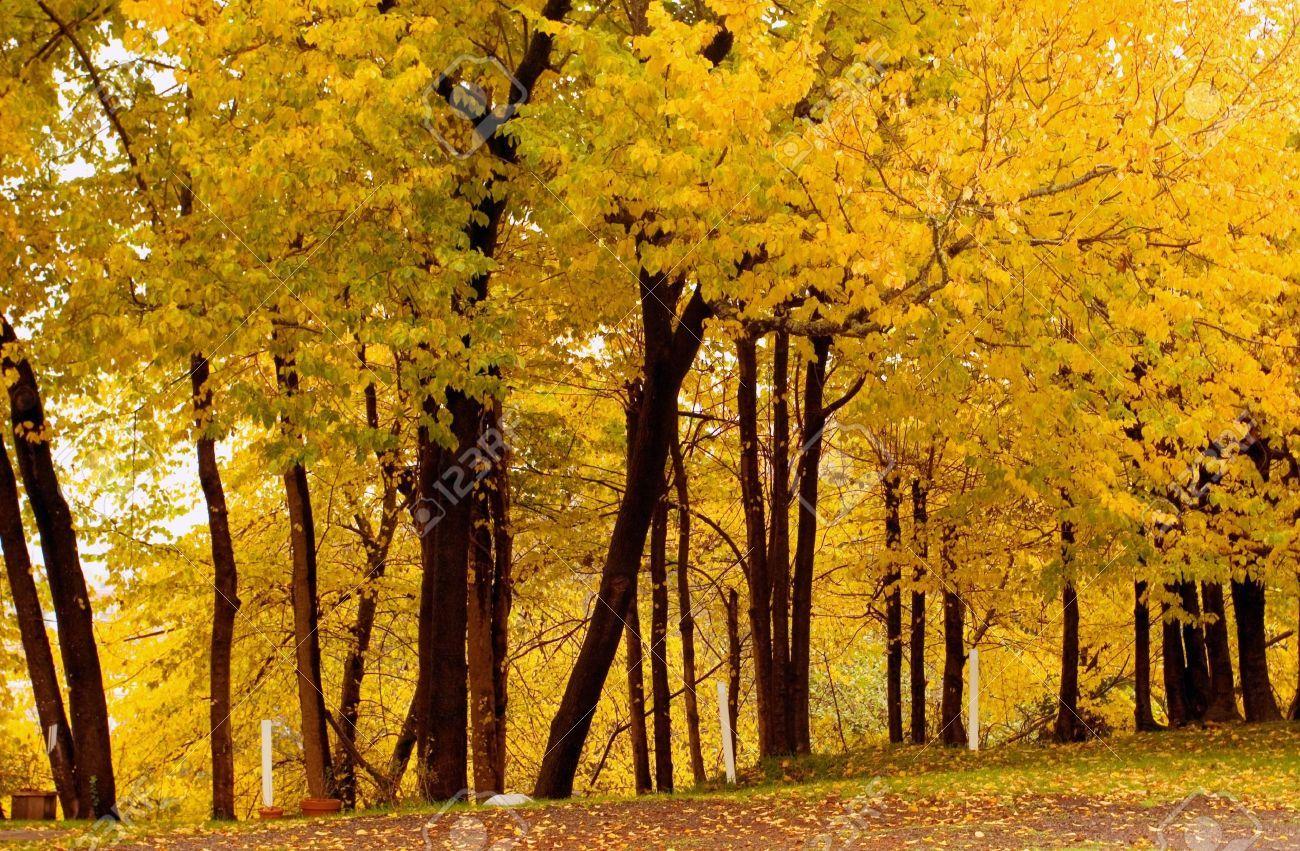 alberi nord italia autunno - Cerca con Google