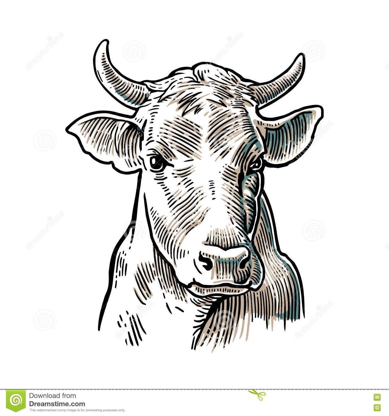 Résultat De Recherche D Images Pour Images Tete Vache