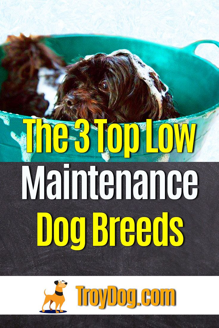 The 3 Top LowMaintenance Dog Breeds in 2020 Dog breeds
