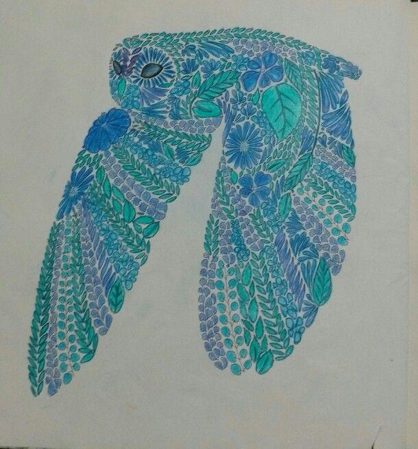 Coruja - livro reino animal