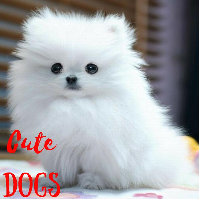 Dog Dogs Dogsofinstagram Vacation