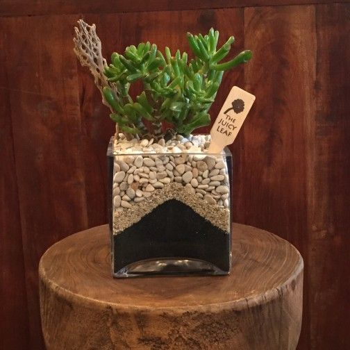 Succulent in a square vase with black sand white rock los angeles succulent in a square vase with black sand white rock los angeles flower delivery mightylinksfo
