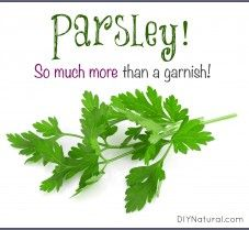 Benefits of Parsley:  Not Just For Garnish Anymore!