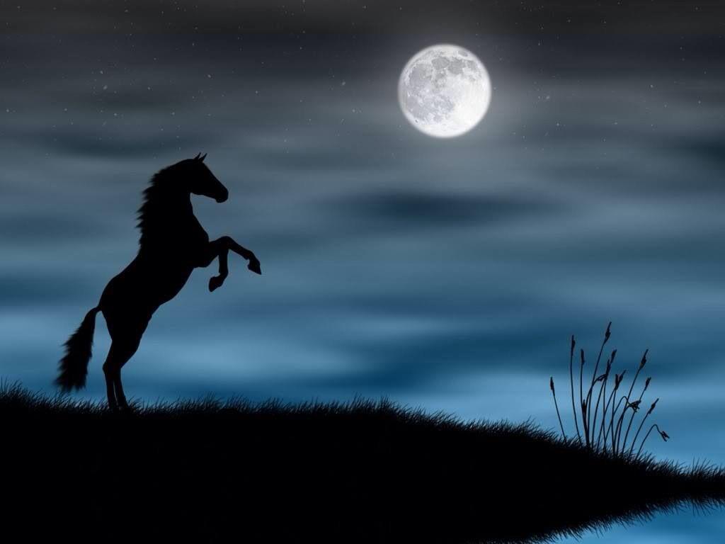 Cool Wallpaper Horse Lightning - bf6692a04b015510ff662027a61d9fd8  Trends_759834.jpg