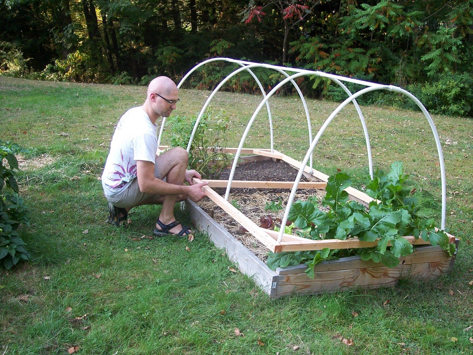 Hoop house for raised bed Gardening Pinterest Gardens