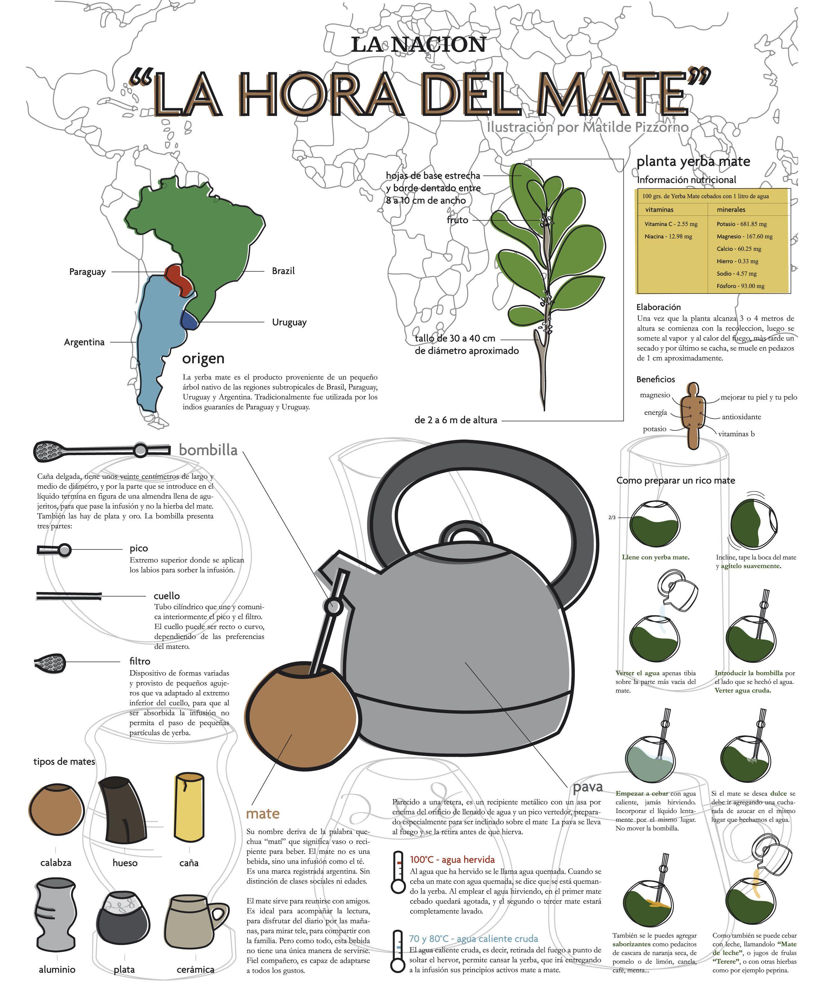 Circuito Yerba Mate : Infografia mate imprimir escuela pinterest