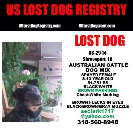 Lostdog 8 29 14 Shreveport La Australiancattledog Mix Spayed